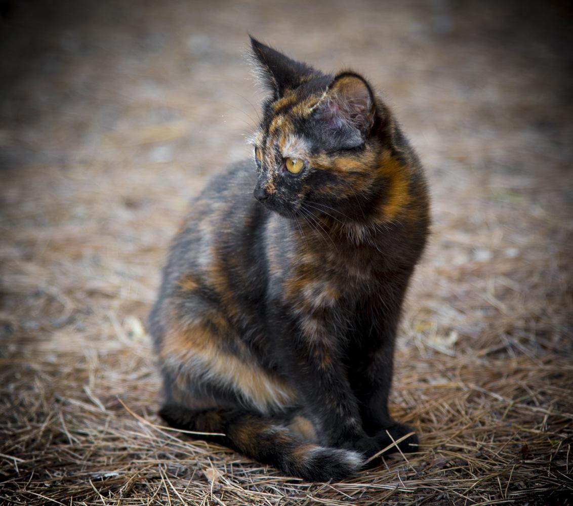beau chat en saint chinian vin aoc languedoc