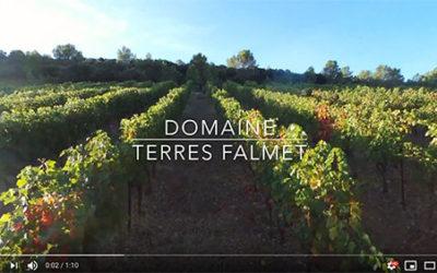Vidéo du vignoble au petit matin d'un jour de vendanges