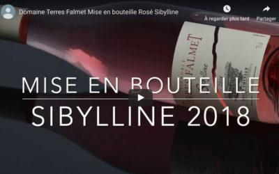 Mise en bouteille du rosé 2018 Sibylline