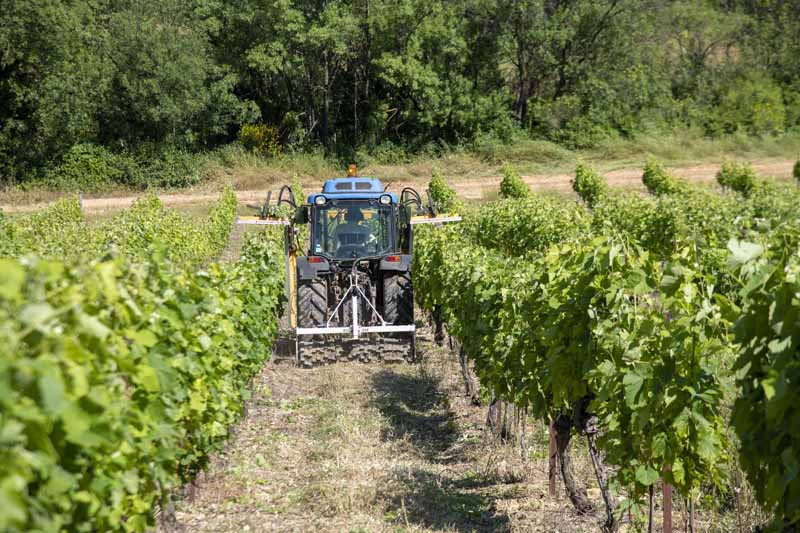 comment on rogne la vigne