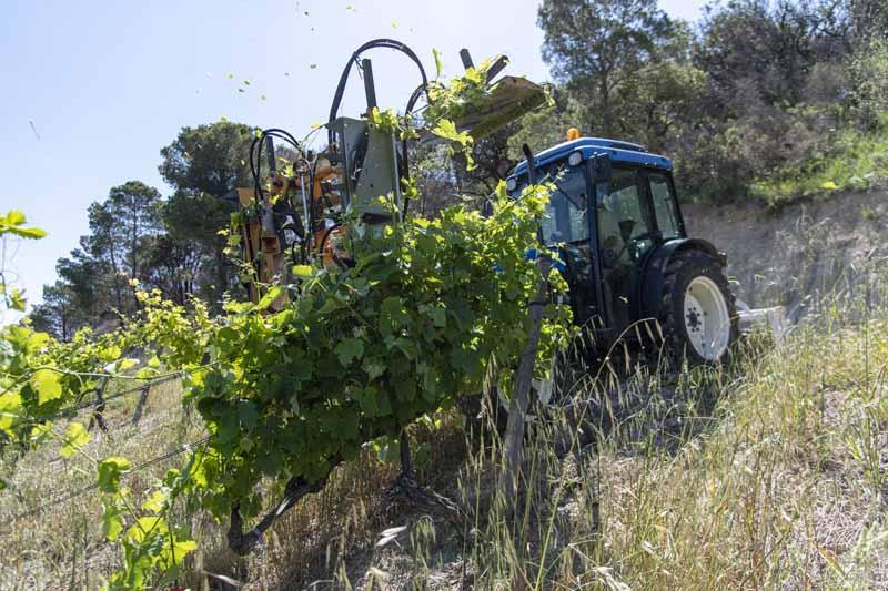 tracteur rognage vigne languedoc