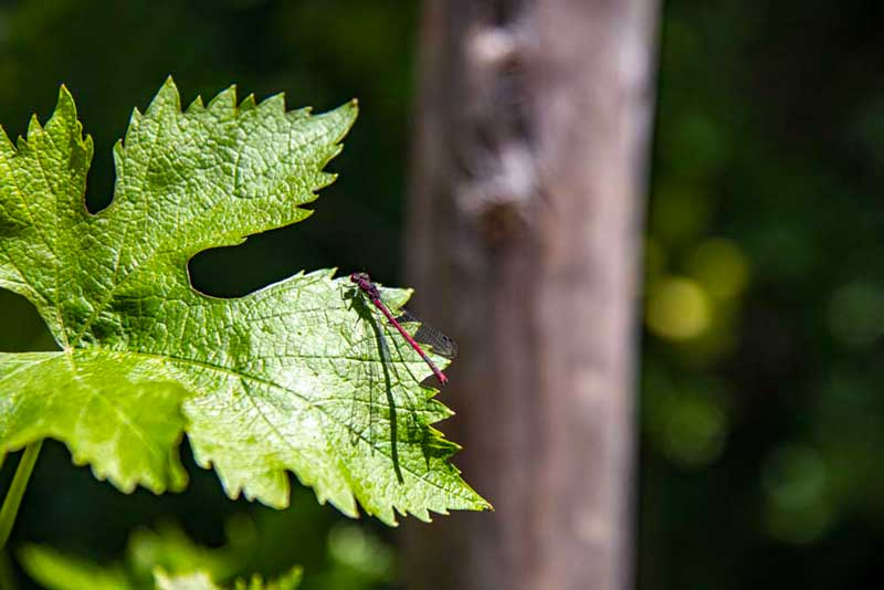 insecte agro ecologie