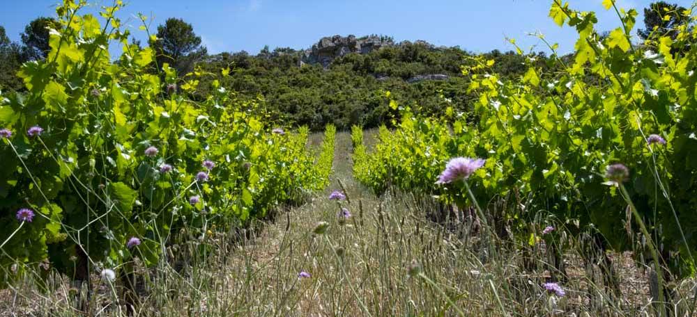 vigne agro ecologie