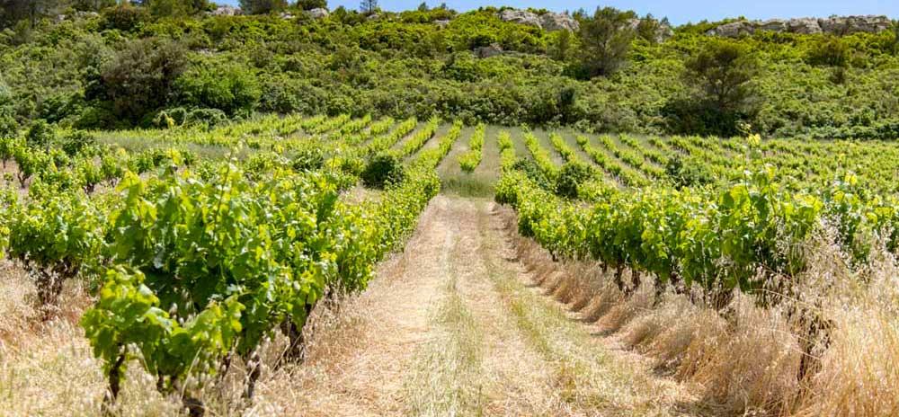 vin hve haute valeur environnementale